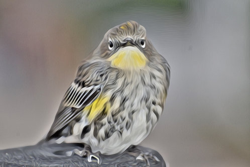 Note Card Miracle Bird Photography Art