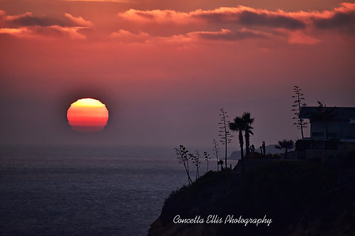 Note Card Sunset KTLA New Royal Palms San Pedro Ca Photography By Concetta Ellis