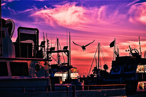 Note Card Pink Sunset Pelican Photography By Concetta Ellis