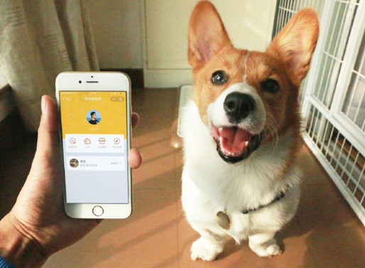 """Tech for good in Alibaba"":App programme for lost pets to avoid heartbreak"