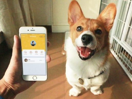 """""""Tech for good in Alibaba"""":App programme for lost pets to avoid heartbreak"""