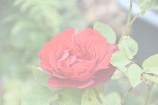 DSC_1851_edited.jpg
