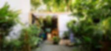 Ginkgo 788-259 (EDIT).jpg