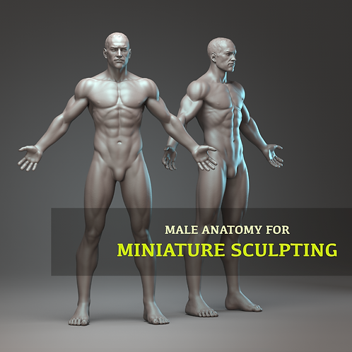 Male anatomy for Miniatures