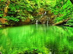 Ormanın Derinliklerinde Saklı Havuz