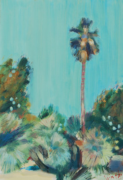Purple Palm, Palma