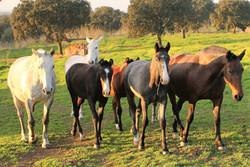 1 cavalos em estado livre 1.jpg