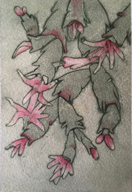 Sue Cactus.jpg