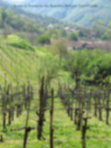 the best prosecco wineries Italy