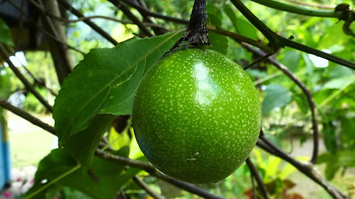 Jamaican Fruit (Air Freshener)