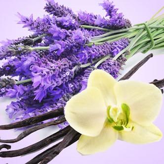 Lavender Vanilla (Air Freshener)