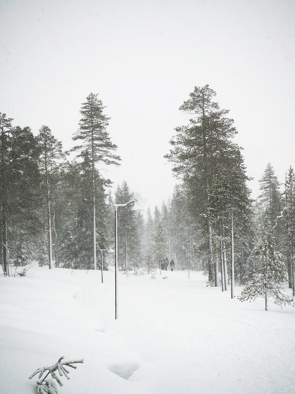 Luonto, Hautaustoimisto Kajo Ky, Klaukkala