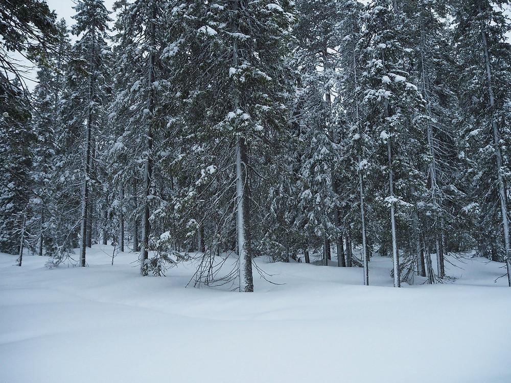 Hautaustoimisto Kajo Ky, Klaukkala, luonto, talvi, lumi