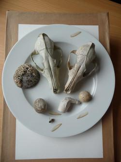 still life skulls