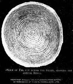 End Grain  Image