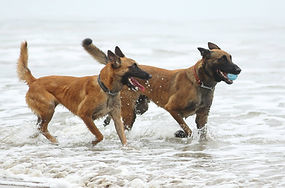 Woof Project beach dogs.jpg