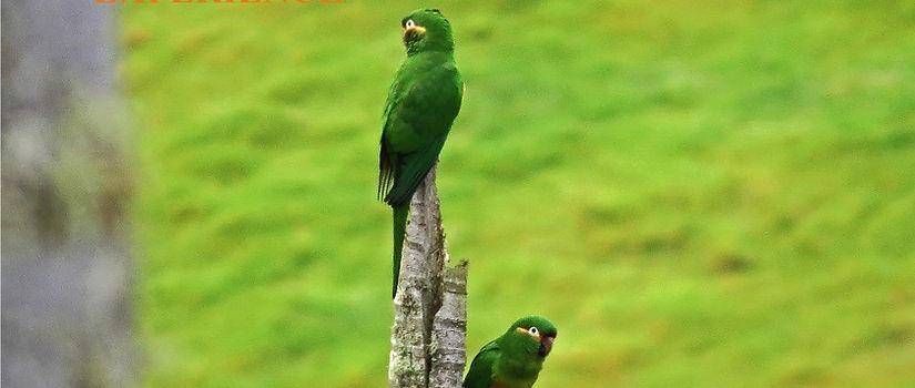 birds Colombia