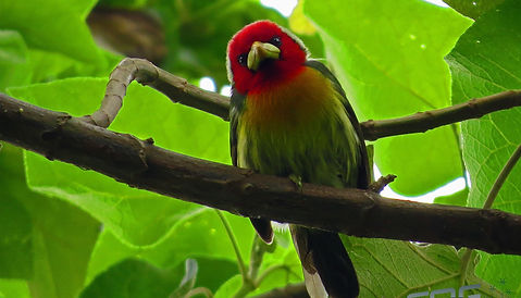 Salento birds