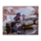 fleece_blanket_wood_ducks.png