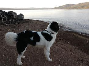 sherpa at the lake.jpg