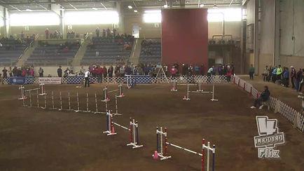 Hummer Saint Bernard National Agility Championship 2014 Jumpers Round