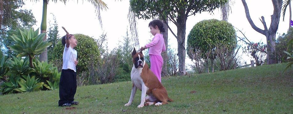 Boxer e crianças