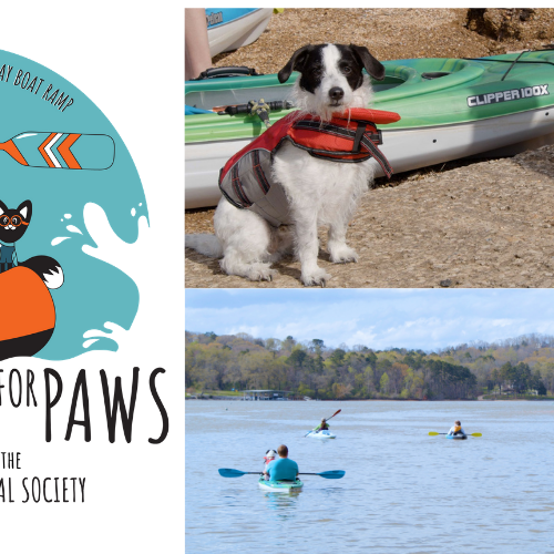 Paddling for Paws