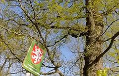 památné stromy.jpg