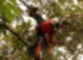 ořez stromů www.stromolezec-zlin_edited.