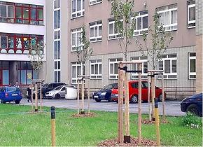 výsadby stromů www.stromolezec-zlin.cz.j