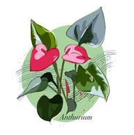 Anthurium.jpg
