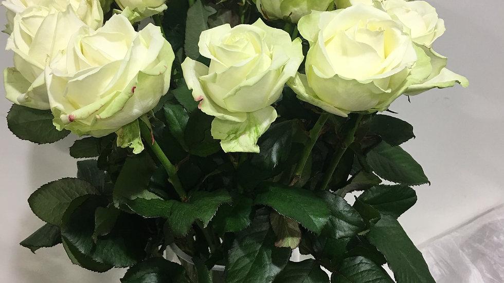 Rose unité Blanche