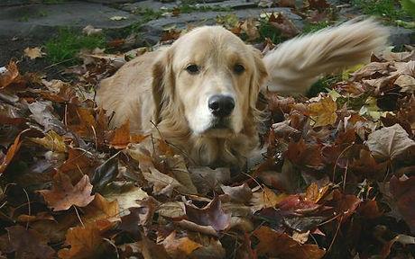 Maggie.leaves.jpg