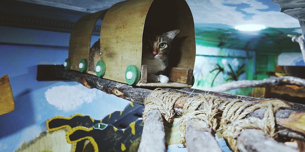 Cat Adventure Club Trial Run