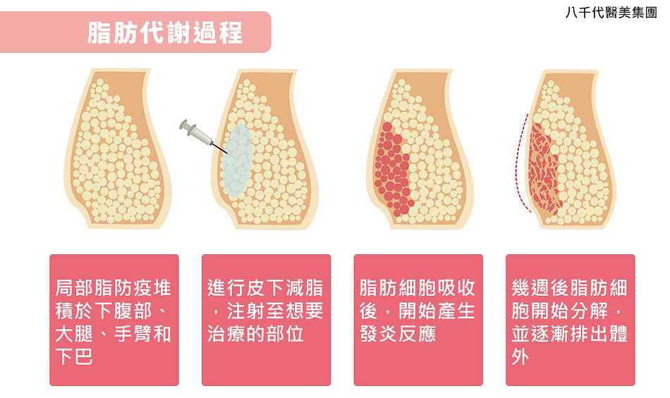 皮下減脂作用原理圖.jpg
