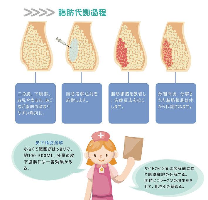 日文官網_服務項目_皮下減脂_脂肪代謝過程.jpg