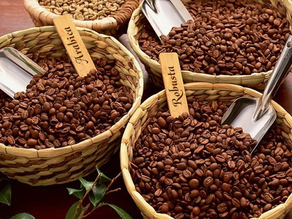 Difference Between Arabica and Robusta Beans