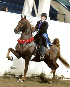 American Saddlebred Lessons Breeding Training Show Horses