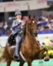 American Saddlebred Lessons Breeding Training Show Horses