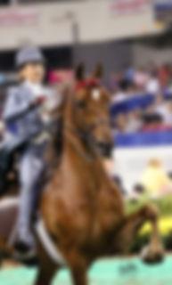 American Saddlebred Lessons Breeding Training Show Horses Saddleseat