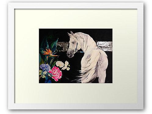 'Kenthurst; A Still Life' A3 Print