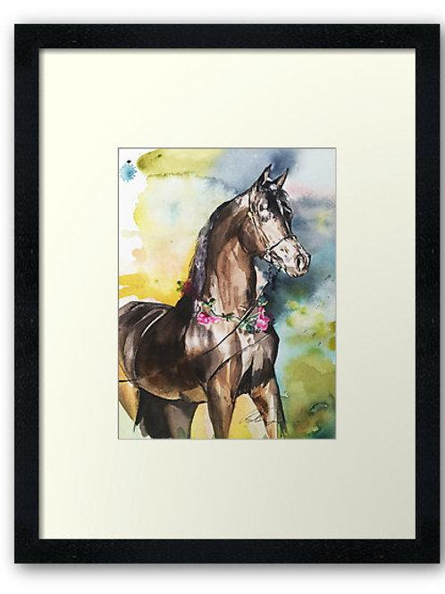 Arab horse art print equine watercolour of bay Arab stallion show horse by Belinda Baynes at Pony and Belle, Sydney
