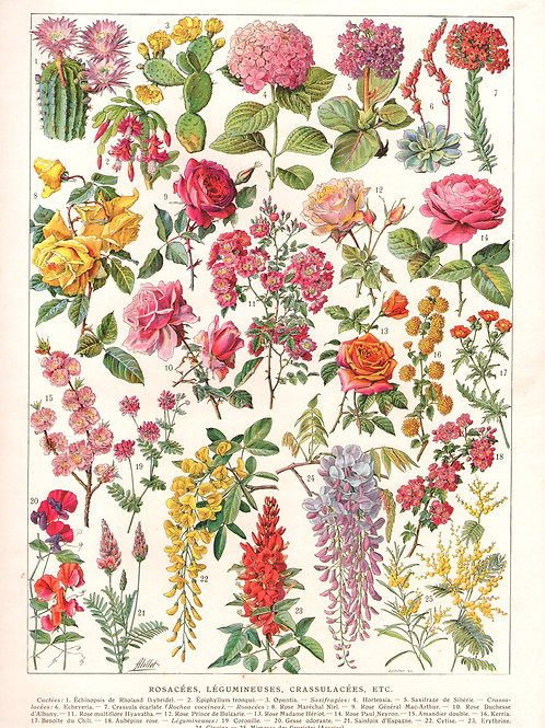 Vintage French flowers A3 Print