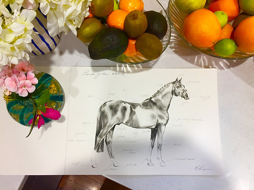 Points of the Horse art by Sydney artist and designer, Belinda Baynes at Pony and Belle horse lover gifts