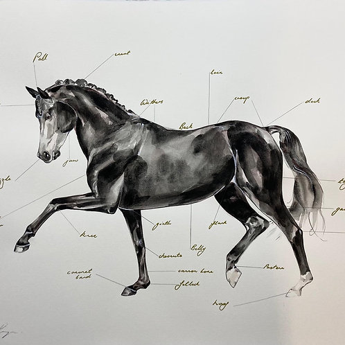 Points of the Horse 2