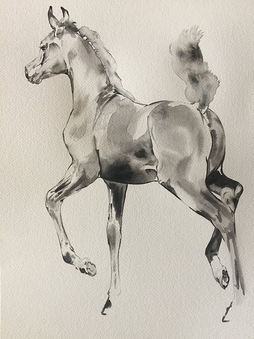 Trotting Foal black ink watercolour horse art. Great horse lover gift idea for any equestrian home interior by Belinda Baynes