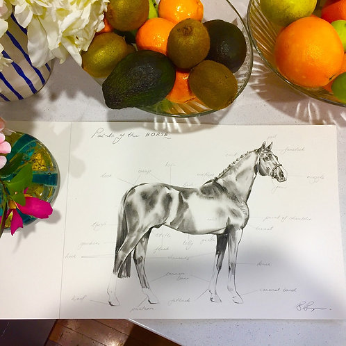 Points of the Horse A3 print