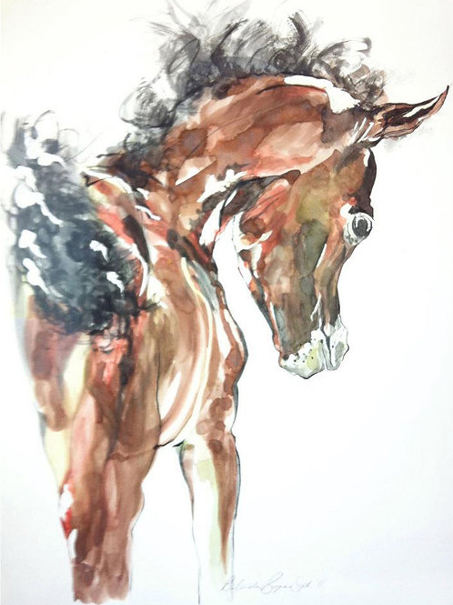 Fuzzy Foal horse art by Belinda Baynes. Equestrian art horse prints at Pony and Belle Sydney. Cute foal art for horse lover