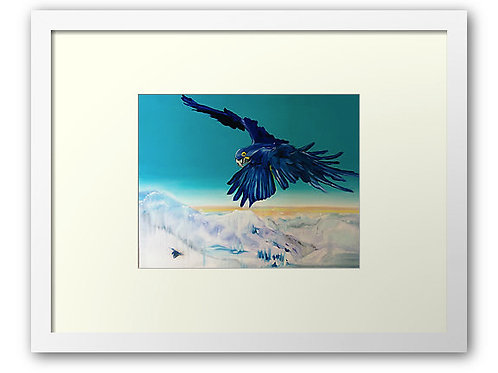 Lost art bird print by Belinda Baynes. Amazonian Rio Macau flying over Snowy Mountains Australia. Aqua Turquoise background