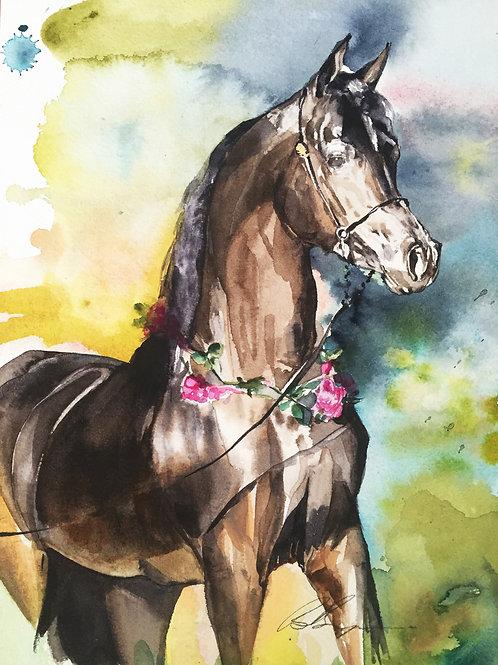 """My Arabian"" horse arabian art equine watercolour by Sydney artist and designer, Belinda Baynes at Pony and Belle Sydney"